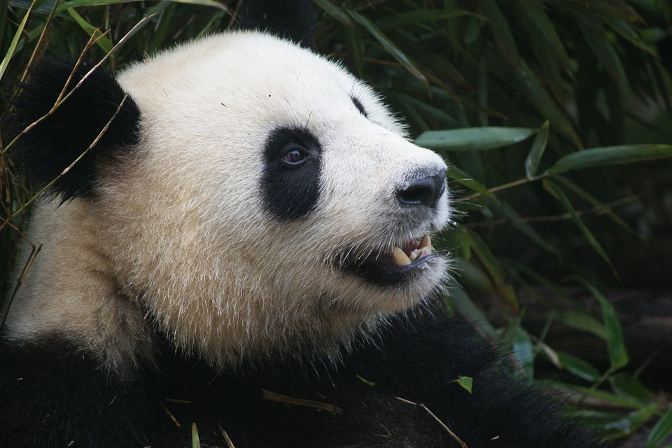 Google Rolls Out Panda 4.2 Refresh