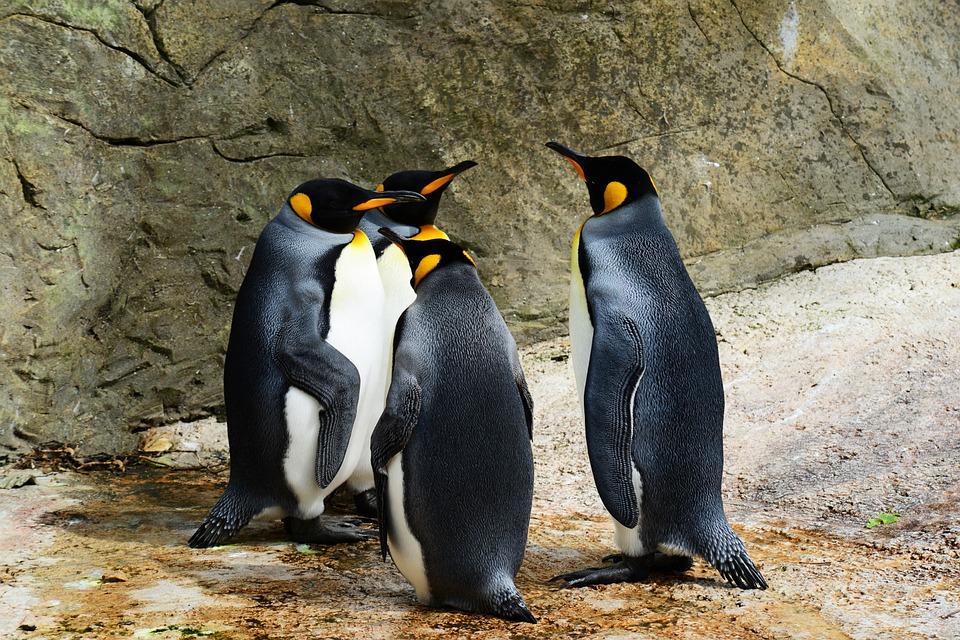 Is Google's Penguin Too Tough on SEOs?