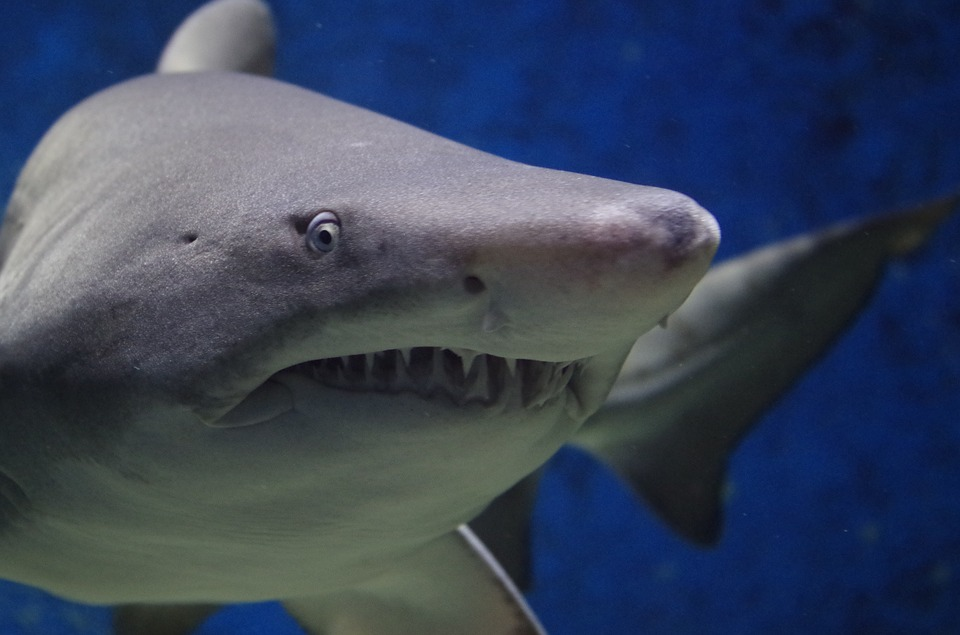 Daily Fantasy Sports Sites Scramble to Deal With Sharks