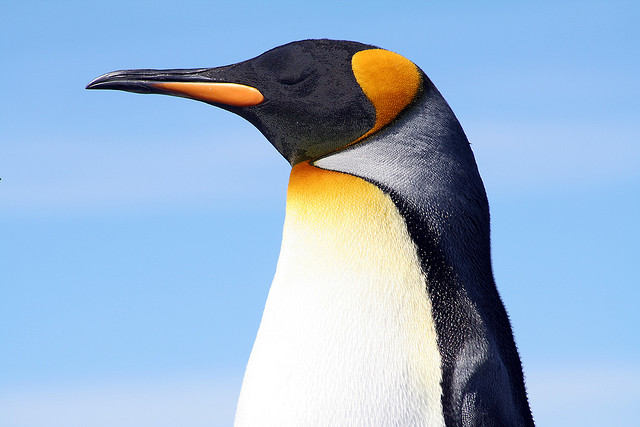Google Penguin: Panda Algorithm Gets a Revamp